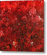 Color In The Tree 02 Metal Print
