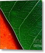 Color Me Mango Sweet And Spicy Metal Print