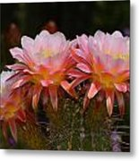Color Me Pink Metal Print