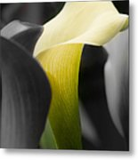 Color On Black And White Metal Print