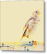 Color Sparrow Metal Print