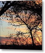 Color Through The Trees Metal Print