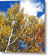 Colorado Aspens And Blue Skies Metal Print