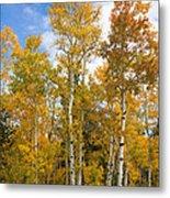 Colorado Autumn Aspens  Metal Print