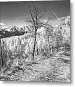 Colorado Backcountry Autumn View Bw Metal Print by James BO  Insogna