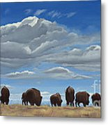 Colorado Bison Moving On Metal Print