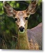 Colorado Deer Metal Print