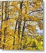 Colorado Fall Aspens 2 Metal Print