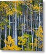 Colorado Fall Color Metal Print