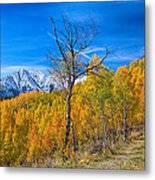 Colorado Fall Foliage Back Country View Metal Print