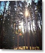 Colorado Pines Metal Print