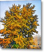 Colored Leaves On The Autumn Forest Metal Print