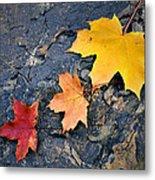 Colored Maple Leaf On Stone Metal Print