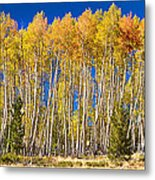 Colorful Aspen Panorama Metal Print
