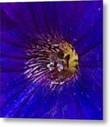 Colorful Attraction Metal Print by Michael Sokalski
