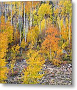 Colorful Autumn Forest In The Canyon Of Cottonwood Pass Metal Print