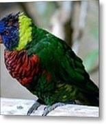 Colorful Bird  Metal Print