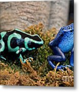 Colorful But Deadly Poison Dart Frogs Metal Print