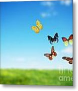 Colorful Buttefly Spring Field Metal Print