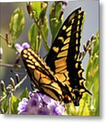 Colorful Butterfly Square Metal Print