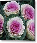 Colorful Cabbage  Metal Print