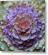 Colorful Cabbage Metal Print