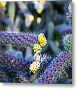 Colorful Cactus Red Purple Green Yellow Plant Fine Art Photography Print  Metal Print