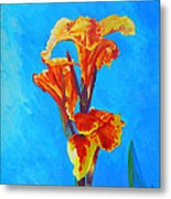 Colorful Canna Metal Print