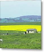 Colorful Canola Field Metal Print