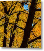 Colorful Canopy Metal Print