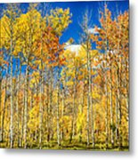 Colorful Colorado Autumn Aspen Trees Metal Print