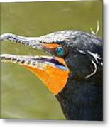 Colorful Double-crested Cormorant Metal Print