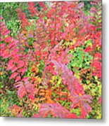Colorful Fall Leaves Autumn Crepe Myrtle Metal Print