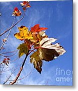 Colorful Fall Leave's With Blue Sky Metal Print