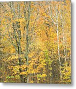 Colorful Fall Trees In Maine Metal Print