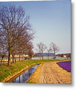 Colorful Fields Of Holland Metal Print