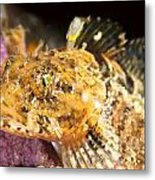 Colorful Fish Metal Print