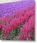 Colorful Flower Fields Metal Print
