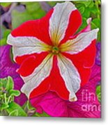 Colorful Garden Flower Metal Print