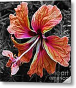 Colorful Hibiscus On Black And White 2 Metal Print by Kaye Menner