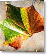 Colorful Leaf On The Ground Metal Print