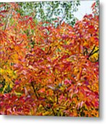Colorful Leaves In Autumn Metal Print