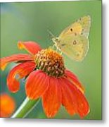 Colorful Light Metal Print