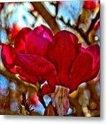 Colorful Magnolia Blossom Metal Print