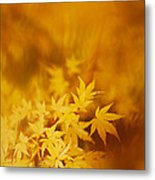 Colorful Maple Metal Print