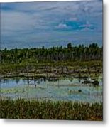 Colorful Marsh Metal Print by Jason Brow