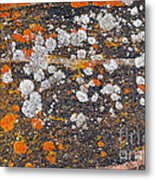 Colorful Moss Spots On A Gneiss Rock Metal Print