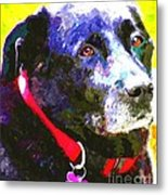 Colorful Old Dog Metal Print