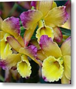 Colorful Orchids Metal Print