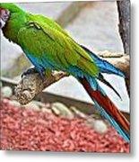 Colorful Parrot Metal Print